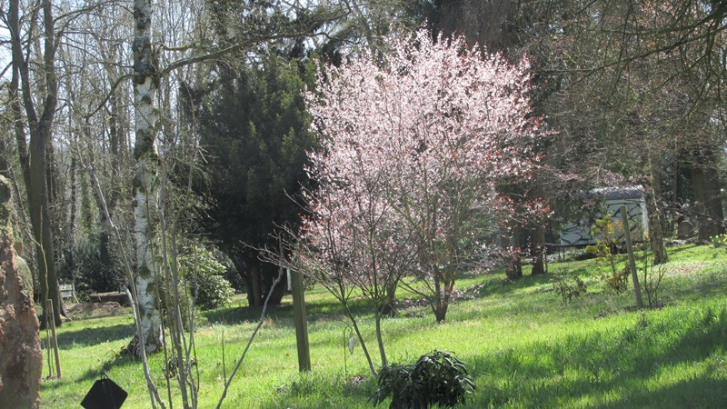 Arboretum der Baumpark in Plauen - 8 April 2020