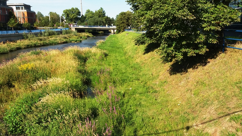 Niedrigwasser in der Weißen Elster in Plauen - die Elsteraue