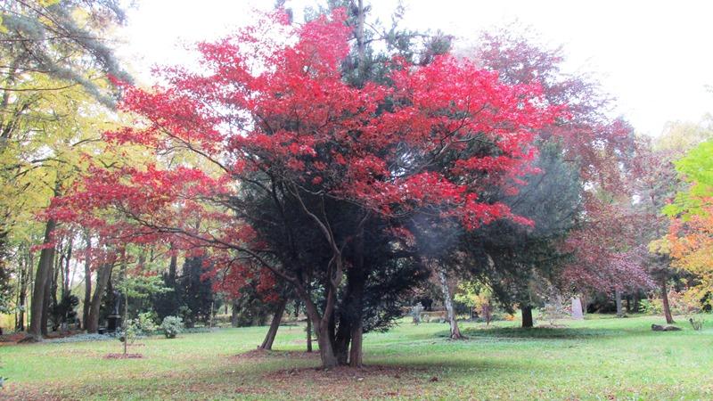 Das Arboretum iin Plauen m Oktober